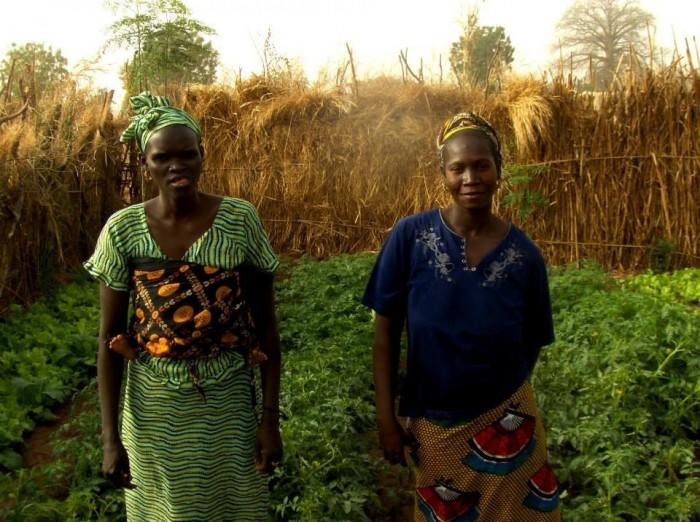 Țărănci din Djimini, în faţa grădinii de roşii cultivate din seminţele Sarei